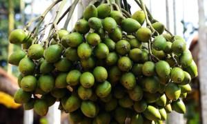 小槟榔做出25亿元大产业