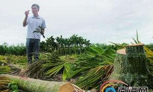 西环铁助力三亚开发西部新城 村民自砍槟榔树搬迁给力