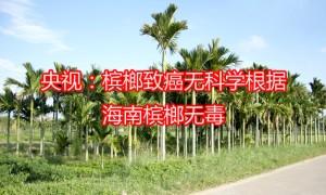 央视:槟榔致癌无科学根据 海南槟榔无毒副作用