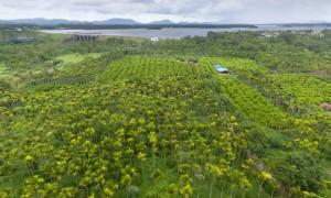 """槟榔企业求""""果""""若渴,引领海南槟榔产业再升级"""