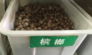 槟榔种子几月播种最好?